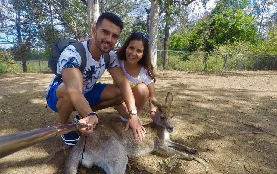 Ver canguros y koalas en Australia